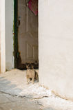 Alley dog Stock Images