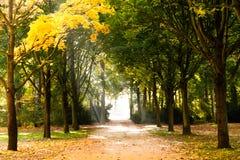 Beginning of autumn Royalty Free Stock Image