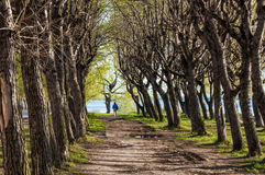 Alley on the embankment of the river in the spring. Stock Photos