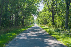 Alley and empty narrow countryside road Royalty Free Stock Images