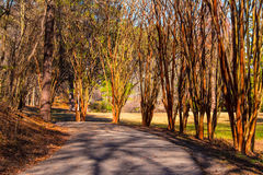 Alley with leopard trees in Lullwater Park, Atlanta, USA. Alley with leopard trees and curved road in Lullwater Park in sunny autumn day, Atlanta, USA Royalty Free Stock Photos