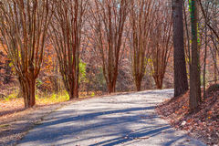 Alley with leopard trees in Lullwater Park, Atlanta, USA. Alley with leopard trees and curved road in Lullwater Park in sunny autumn day, Atlanta, USA Royalty Free Stock Photography