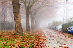 Alley in a European city. In the autumn Royalty Free Stock Photography