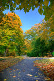 Alley with falling leaves in fall park. Colorful alley with leaves in fall autumn park Stock Image