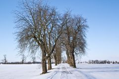 Alley between fields in winter Royalty Free Stock Images