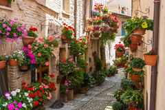 Alley with flowers Royalty Free Stock Photo