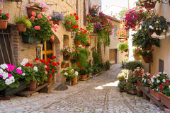 Alley with flowers pots in Spello, Umbria, Italy. Coloured alley with vases of flowers in Spello, Umbria, Italy royalty free stock photo