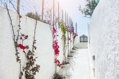 Alley with flowers Royalty Free Stock Image