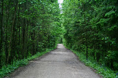 Alley in the forest Stock Photography