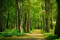 Alley in the forest Royalty Free Stock Images