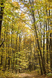 Alley in forest. In autumn light Stock Photos