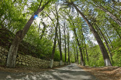 Alley in the forest. Campulung. Fish-eye shot Royalty Free Stock Photo