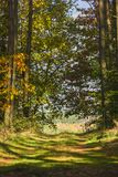 Alley in the forest between trees with colorful leaves on the tr Royalty Free Stock Photography