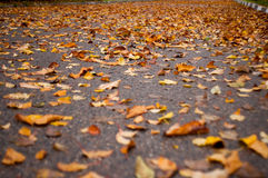 An alley full of leaves Stock Images