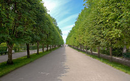 Alley in garden of Peterhof. Russia Stock Photography