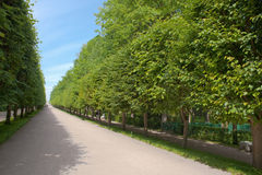 Alley in garden of Peterhof Royalty Free Stock Photo