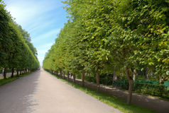 Alley in garden of Peterhof Stock Photos
