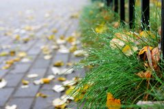 Alley and grass stock images