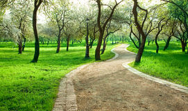 Alley in green apple garden Royalty Free Stock Photo