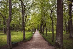 Alley with green high trees, road or pathway royalty free stock photos