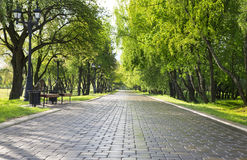 Alley in green park. Stock Photo