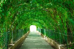 Green park tunnel royalty free stock photography