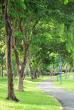 Alley and green trees in park Stock Photography