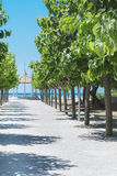 Alley with green trees in row leading to the sea Royalty Free Stock Photography