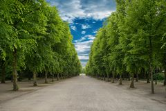 Alley with green trees in Tuileries garden in Paris, France. Alley with green trees in Tuileries garden in Paris stock photography