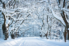 Free Alley In Snowy Morning Royalty Free Stock Photos - 79719738