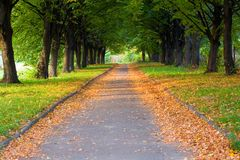 Free Alley In The Park Royalty Free Stock Image - 1334176