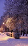 Alley lights and snow covered trees Royalty Free Stock Photo