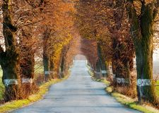 Alley of lime tree. Autumnal view of alley of lime tree Stock Photos