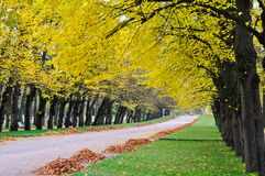 Alley of lime trees in Pavlovsky park in autumn, Pavlovsk, St. Petersburg, Russia royalty free stock photo