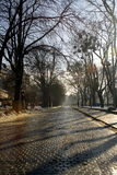 Alley with long shadow from trees on stone bricks road. At winter morning Stock Photo