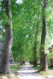 ALLEY: long walkway through the plane tree Royalty Free Stock Photos