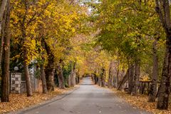 The alley of love, in Vytina village, Arcadia, Peloponnese, Greece. This picturesque alley is called `the alley of love` and is located in Vytina village, a Royalty Free Stock Photography