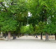 Alley in Luxembourg garden Royalty Free Stock Images