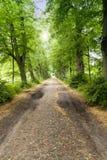 Alley in Mecklenburg-Western Pomerania Royalty Free Stock Photo