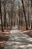 Alley in the mediterranean pine forest. View of alley in the mediterranean pine forest on a sunny day Royalty Free Stock Photos