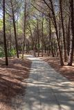 Alley in the mediterranean pine forest. View of alley in the mediterranean pine forest on a sunny day Stock Photography