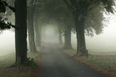 Alley in the mist Stock Photography