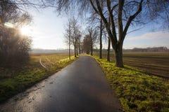 Alley. Nature landscape with trees, Czech republic, Brandys nad Labem, Stara Boleslav, Houstka Stock Photos