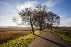 Alley. Nature landscape with trees, Czech republic, Brandys nad Labem, Stara Boleslav, Houstka Stock Images