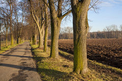 Alley. Nature landscape with trees, Czech republic, Brandys nad Labem, Stara Boleslav, Houstka Stock Photography