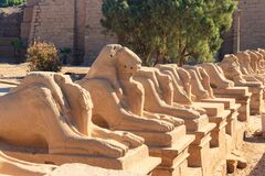 Free Alley Of Sphinxes At Karnak Temple Complex In Luxor, Egypt Stock Image - 175907711