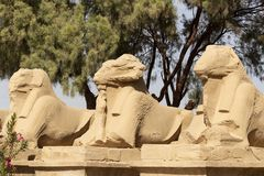 Free Alley Of The Ram-headed Sphinxes. Karnak Temple. Luxor, Egypt Royalty Free Stock Photos - 168125828