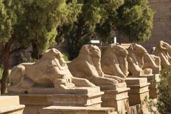 Free Alley Of The Ram-headed Sphinxes. Karnak Temple. Luxor, Egypt. Royalty Free Stock Photos - 168125838