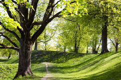 Alley Of Trees In Spring. Royalty Free Stock Photography