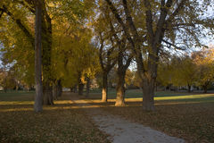 Alley with old American elm trees in fall colors. Alley with old American elm trees - the Oval at Colorado State University campus in late autumn royalty free stock photography